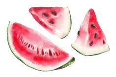 Watercolor watermelon illustration by lenavetka87 on Creative Market