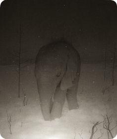 ryan salge, ghostly elephant.