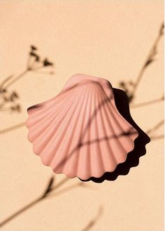 Seashell box in Nude is part of the new Inked Clay Collection . Object Photography, Dreamy Photography, Minimal Photography, Floral Photography, Product Photography, Miami Beach, Aesthetic Backgrounds, Aesthetic Wallpapers, Keramik Vase