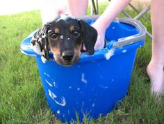 """""""I'm gonna hop out of this bucket and roll in some mud THE SECOND you're finished."""""""