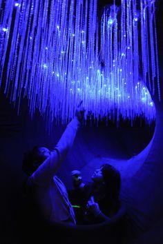 Glow worms in the Creatures of Light exhibit (c) AMNH/D. Finnin