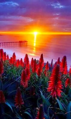 Wallpaper Viewer for Sunset - Beautiful Views All Nature, Amazing Nature, Beautiful World, Beautiful Images, Amazing Sunsets, Beautiful Sunrise, Great Pictures, Belle Photo, Beautiful Landscapes