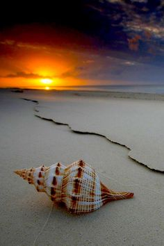 Beautiful seashell on the beach and there is a sunrise. Beautiful Sunset, Beautiful Beaches, Beautiful World, Landscape Photography, Nature Photography, Jolie Photo, Beach Scenes, Amazing Nature, Pretty Pictures