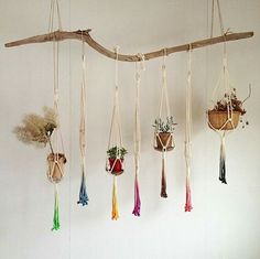 Hang your air plants