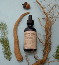 Fern & Fungi restocked and new range of products