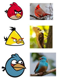 Here's what Angry Birds might look like in real life