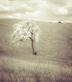 White Tree by PureLightGallery on Etsy, $16.00