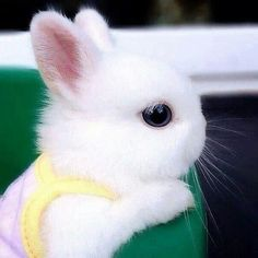 Cute baby animals, cute baby bunnies a animals. Baby Animals Super Cute, Cute Baby Bunnies, Cute Little Animals, Cute Funny Animals, Cute Cats, Tiny Bunny, White Bunnies, Baby Animals Pictures, Cute Animal Pictures