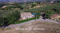 Vista sull' oliveto