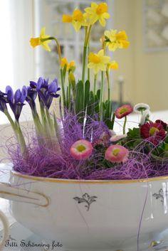 Tittis Trädgård: Idag kom våren...tror jag