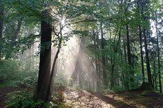 Morgenstimmung in Forstenrieder Park - Genießen Sie die zauberhafte Stimmung des anbrechenden Tages bei einem Spaziergang durch die Naturlandschaft rund um den Waldgasthof Buchenhain. So wundervoll ist ein Urlaub in München