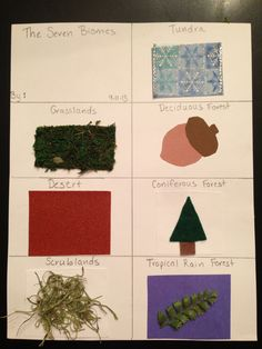 CC cycle 2 Week 1 Craft for the seven biomes Science For Kids, Science Activities, Nature Study, Biomes, Zoology, Habitats, Homeschool, Teaching, Children
