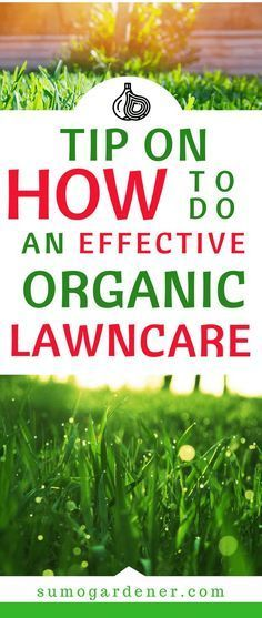 If You Are One Of Th Organiclawncare Organic Lawn Organic Lawn Care Organic Vegetable Garden