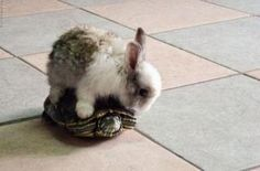 Guess he doesn't know that the rabbit is faster than the turtle.