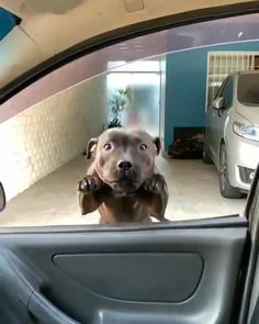 WAIT FOR MEEEEEEE Source by ToysOpoly dog dog memes dog videos videos wallpaper dog memes dog quotes dogs dogs pictures dogs videos puppies puppy video Funny Dog Videos, Funny Animal Pictures, Cute Funny Animals, Cute Baby Animals, Funny Dogs, Pet Videos, Funny Dachshund, Dachshund Puppies, Cute Puppies