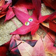 What a colorful fall! :-) #flowleaf2015