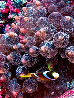 Scuba diving Bali Nusa Lembongan - http://bali-traveller.com/scuba-diving-bali-nusa-lembongan-2/