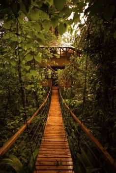 pictures of costa rica's trees   ... Treehouse Village in Costa Rica (31 pics) - Pic #26 - Izifunny.com