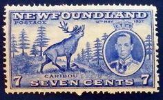 #timbre #stamp #znamky #philatelie #philately #filatelia 7 Seven, For Sale Sign, Newfoundland, Stamp, Door Bells, Stamps, Newfoundland Dogs