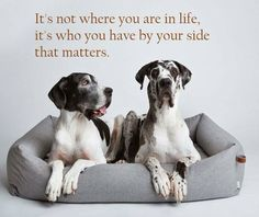 Exclusive cat and dog furniture, designer beds, luxury pet supplies. Weimaraner, Big Dogs, Cute Dogs, Animals And Pets, Cute Animals, Blue Great Danes, Designer Dog Beds, Great Dane Puppy, Animal Quotes