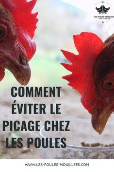 Coups, Voici, Rooster, Animals, Chicken, Design, Garden, Easy Chicken Coop, Hens And Chicks