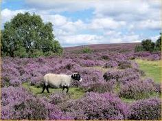 Image result for heather moors
