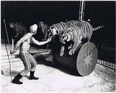 vintage circus .. Duel Tigers Barrel Roll