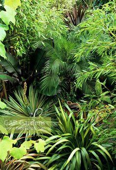 Looking down on a suburban jungle garden - Bamboos, Miniature date palm - Phoenix roebelenii, Yucca gloriosa 'Variegata' coming into flower, Purple leaved banana - Ensete ventricosum 'Maurelli', Cannas and Phormiums
