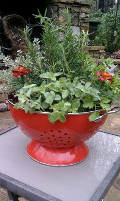Colander container garden. Great idea to plant a salad bowl garden with different types of lettuce! Hostess gift?