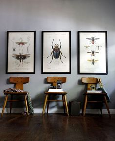 large biology insect prints...vintage wooden chairs...and vintage cameras. very cool.