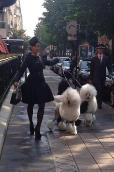 Another Pinner Said--I mean really, standard poodles, I just think it needs to happen lol! I see Black for you :)