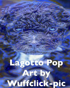 Lagotto Romagnolo POP ART