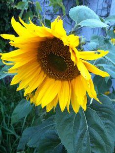 Bloom, Garden, Plants, Garten, Lawn And Garden, Gardens, Plant, Gardening, Outdoor