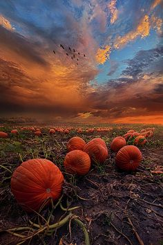 In Search Of The Great #Pumpkin Wisconsin By Phil Koch.#sunset #fall