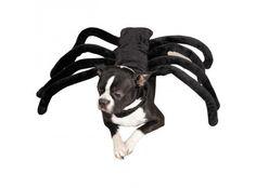 costume-araignee-pour-chien