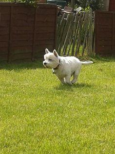 Bengie chasing that pigeons