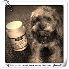 Meet Mik. #Pets love #Nutiva #CoconutOil nutiva.com #Mik #dog