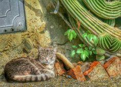 cat and Cactus or gatto e succulent