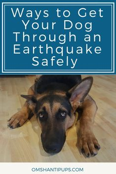 Dogs You may have heard that Alaska had a major earthquake! Read on for some tips on how to get your dogs through earthquakes safely. Cheap Pet Insurance, Dog Insurance, Life Insurance, Puppy Care, Dog Care, Tortoise As Pets, Dog Spay, Cute Dog Photos, Dog Pictures