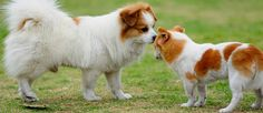 Shoes For Dogs, Borzoi Dog, - Laughing Dogs, Dog Sitting Prices Per Day. Rottweiler, Pitbull, Chihuahua Dogs, Chihuahuas, Puppies, Positive Dog Training, Training Your Dog, Dog Sitting Prices, Pet Sitting