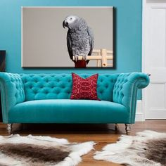 Large Size Box Framed Canvas Print Artwork Stretched Gallery Wrapped Wall Art Like Painting Hanging Original Decorative Modern Home & Living Decor World Parrot Bird Plumage Wings Gray Cockatoo Corella Framed Canvas Prints, Artwork Prints, Canvas Frame, Poster Prints, Parrot Bird, Cockatoo, Box Frames, Home And Living, Love Seat