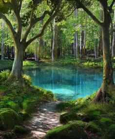 Travel Discover A Jewel in the Forest - Martin - Nature travel Nature Pictures Beautiful Pictures Beautiful World Beautiful Places Beautiful Forest Landscape Photography Nature Photography Film Photography Photography Ideas Fantasy Landscape, Abstract Landscape, Landscape Paintings, Acrylic Paintings, Landscape Design, Watercolor Landscape, Landscape Pics, Forest Landscape, Vacation Places
