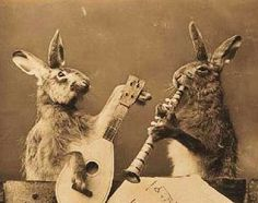 i've always loved these antique posed animal pics