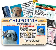 Does your dog have a license? All 50 State Available. Free Bonus Collar ID. http://petdentalcare.net/mypetdmv