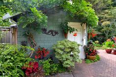 Image result for tall green outdoor shrubs seattle