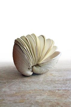 clam book shell sculpture