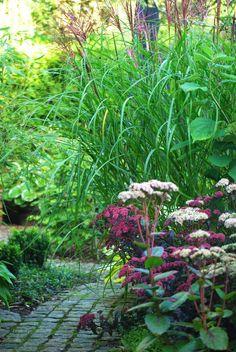 Almbacken: Kärleksört En av mina absoluta favoriter i trädgården är kärleksörten. Tidigt på våren kommer den med sina fantastiskt snygga bladrosetter. När blommorna bildas tar den en ny form, fortfarande lika snygg fast den inte blommar än. Så till sist slår blommorna ut till glädje för alla, både människor och små djur. Blomaxen står sen fint hela vintern igenom. Om du inte har kärleksört i din trädgård tycker jag absolut att du ska ge den en chans. Och du, sätt många! Det är masseffekten…