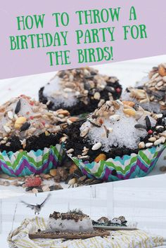 How to Throw a Birthday Party for the Birds