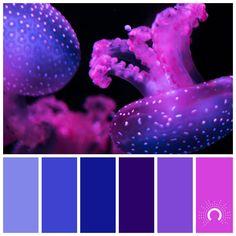 purple - astelle's colors Violet Things violet color and purple Color Schemes Colour Palettes, Blue Colour Palette, Purple Colors, Color Blue, Diy Y Manualidades, Colouring Pics, Coloring, Color Harmony, World Of Color