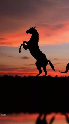 Horse silhouette rearing up in pink and orange soft sunset glow.